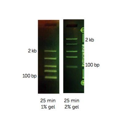M3104 - MiniOne DNA Marker