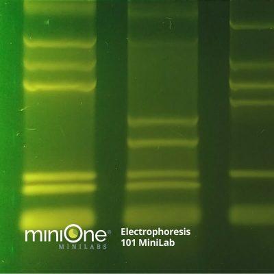 Electrophoresis 101 MiniLab