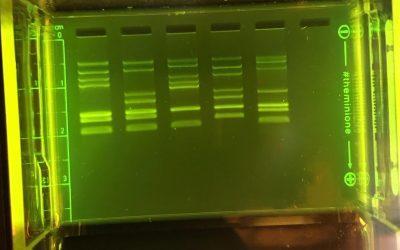 Storing Casted Electrophoresis Gels – a Teacher Guest Blog