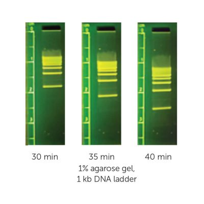 M3116 - MiniOne - 1kb DNA Ladder