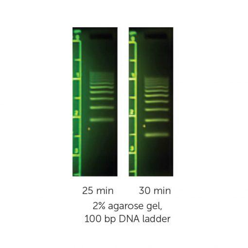 M3117 - MiniOne - 100 bp DNA Ladder