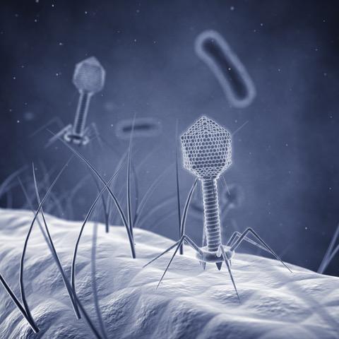 lambda-phage-lab