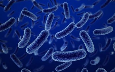 Bad luck at a Potluck: Studying Shigellosis and Food Safety