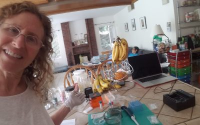DNA Fingerprinting in the Kitchen – Using MiniOne MiniLabs for Science At Home!